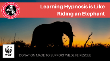 learning hypnosis is like riding an elephant